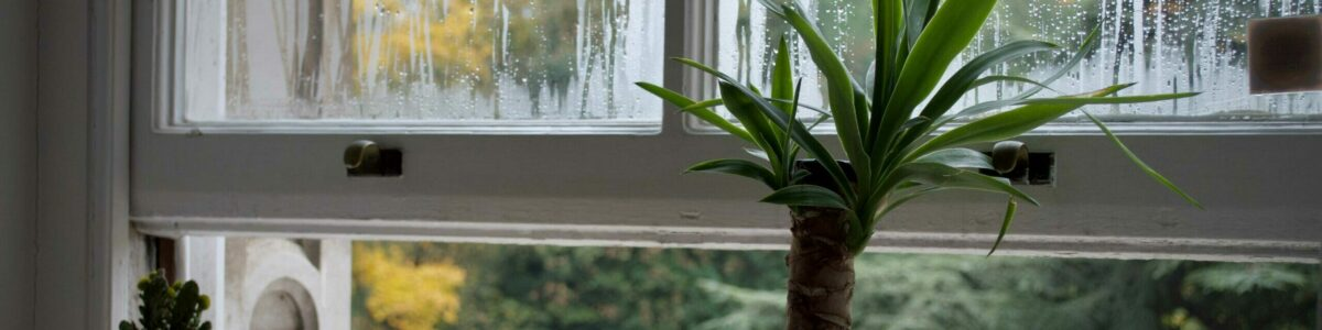 fenêtre humidité